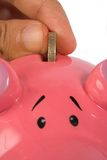 Business savings on piggy bank - closeup Royalty Free Stock Images