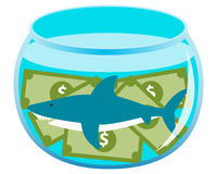 Business shark. Fish in an aquarium with money Stock Image