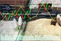 Business stock finance marketing competition index variety of ri. Ce in supermarket sale growth shown by graph and chart with data analysis background Royalty Free Stock Image