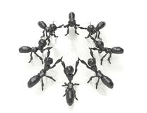Business team concept.3d ants with cubes. Stock Photo