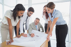 Business team reading work plans Royalty Free Stock Image