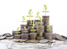 Business tree finance and banking concept investment. Stock Photography