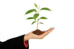 Business woman holding baby plant Stock Image