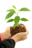 Business woman holding baby plant Stock Images