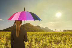 Business woman holding multicolored umbrella in sunflower field Royalty Free Stock Photos