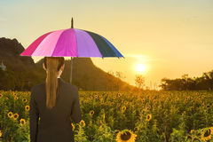 Business woman holding multicolored umbrella in sunflower field Stock Photos