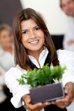 Business woman holding a plant Stock Photography