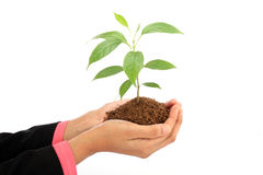 Business woman holding plant Royalty Free Stock Photo