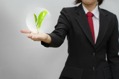 Business woman holding tree. Over gray backgound Stock Image