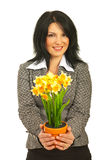 Business woman offering pot of daffodils Stock Photos