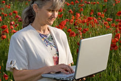 Business woman in poppy field. Woman searching on laptop in poppy field royalty free stock photos