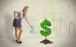 Business woman poring water on dollar tree sign on city backgrou Stock Image