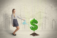 Business woman poring water on dollar tree sign on city backgrou Royalty Free Stock Images