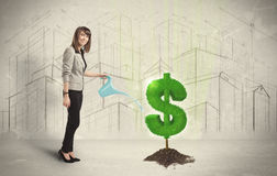 Business woman poring water on dollar tree sign on city backgrou Royalty Free Stock Photos