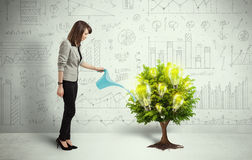 Business woman pouring water on lightbulb growing tree. Concept Royalty Free Stock Photos