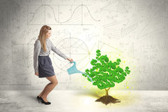 Business woman watering a growing green dollar sign tree Royalty Free Stock Photography