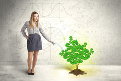 Business woman watering a growing green dollar sign tree Stock Image