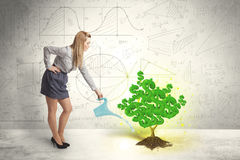 Business woman watering a growing green dollar sign tree Royalty Free Stock Photos