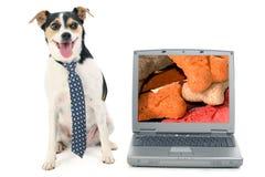 Businessdog en een Laptop Computer met Beeld van Hondebrokjes Stock Afbeeldingen