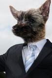 Businessdog Stock Images