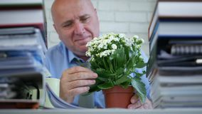 Businessman in accounting archive stop working and arrange a flower on the desk.  stock footage