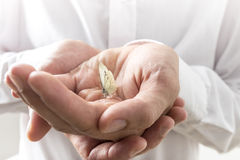 Businessman Bare Hands with Small Butterfly Insect Royalty Free Stock Images