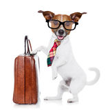 Businessman boss dog Royalty Free Stock Photography