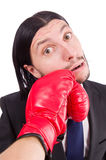 Businessman boxer isolated Royalty Free Stock Photography