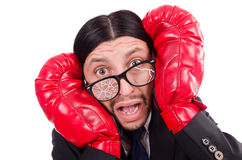 Businessman boxer isolated Stock Image