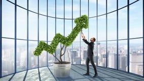 Businessman cares for a big plant shaped as an arrow stock photo