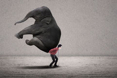 Businessman carry elephant on grey Stock Images