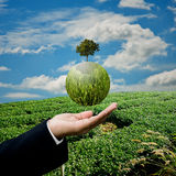 Businessman carry green plant Royalty Free Stock Photography
