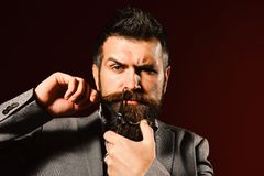 Businessman with confused face on dark red background. Man with long beard holds steel scissors. Macho in formal suit holds and cuts beard and moustache stock photos