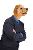 Businessman with crossed arms and dog head Stock Photos