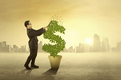 Businessman cutting money tree Stock Photo