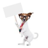 Businessman dog Stock Images
