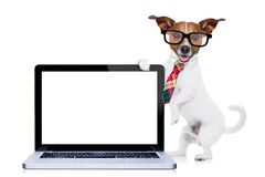 Businessman dog Royalty Free Stock Image