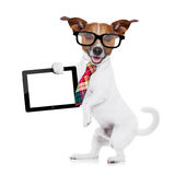 Businessman dog Stock Photography