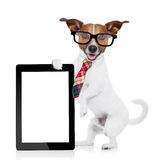 Businessman dog Stock Photo