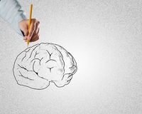 Businessman drawing brain. Close up of male hand drawing human brain Royalty Free Stock Photos