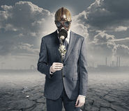 Businessman with dried rose Stock Photography