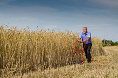 Businessman embarking on a new challenge. Senior businessman embarking on a new challenge as he starts to harvest his field of ripe golden grain using just a stock image