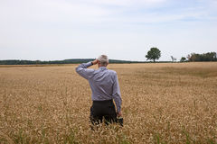 Businessman explore in the wheat field Royalty Free Stock Image