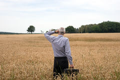 Businessman explore in the wheat field Stock Photos