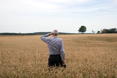 Businessman explore in the wheat field Royalty Free Stock Photography