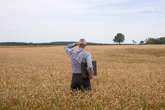 Businessman explore in the wheat field Stock Photo