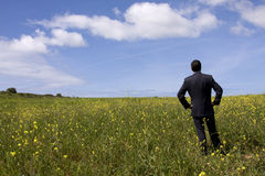 Businessman in the field Stock Photos