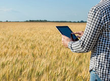 Businessman is on a field of ripe wheat and is holding a Tablet computer. Royalty Free Stock Image