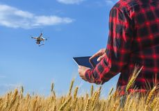 Businessman is on a field of ripe wheat is holding a Tablet computer and controls the quadcopter. Royalty Free Stock Photos