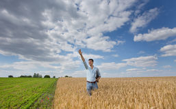 Businessman in the field Stock Photography